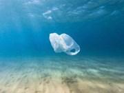 Provincia vietnamita hacia turismo sin desechos plásticos