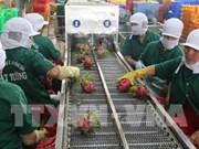 Aumenta Vietnam la exportación de verduras y frutas