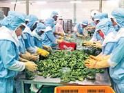 Vietnam ingresa 3,62 mil millones de dólares por ventas de productos agrícolas en mayo