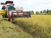 Disminuye Vietnam sus exportaciones de arroz