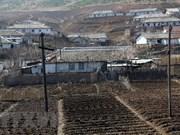 Vietnam entrega cinco mil toneladas de arroz a Corea del Norte
