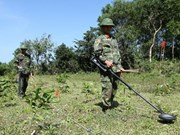 Promueve organización noruega asistencia a Vietnam en desactivación de bombas remanentes de guerras