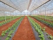 Impulsa ciudad vietnamita la cooperación agrícola con Nueva Zelanda
