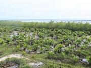 Vietnam impulsa acciones para proteger bosques costeros