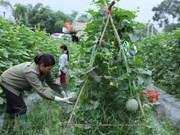 Resaltan en Vietnam eficiente uso de préstamos extranjeros para desarrollo agrícola