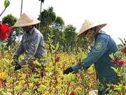 Reconocen avances de Vietnam en cumplimiento de objetivos de desarrollo sostenible
