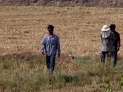 Provocará Tailandia lluvia artificial para aliviar la sequía