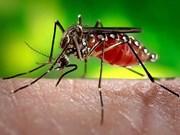 Reportan en Laos la muerte de 34 personas como consecuencia del dengue