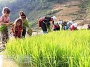 Debaten en Vietnam medidas para acabar con el trabajo infantil en cadenas de suministro