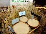 Exportó Vietnam más de cuatro millones de toneladas de arroz en siete meses de 2019