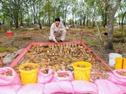 Descubren dos bóvedas con más de mil materiales explosivos en provincia vietnamita de Quang Tri