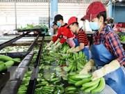 Apunta Vietnam a obtener 4,2 mil millones de dólares por exportaciones hortofrutícolas en 2019