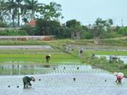 Ninh Binh: Esfuerzos de construcción de nueva ruralidad resultan fructíferos