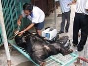 Viet Nam impulsa preservación de oso