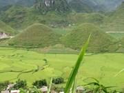 Seminario sobre gestión forestal en Viet Nam