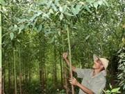 Viet Nam por un desarrollo forestal sostenible