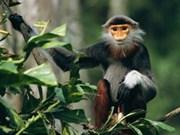 Viet Nam por proteger animales salvajes