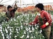 Viet Nam ampliará mercados de exportaciones florales