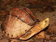 En altiplanicie vietnamita hábitat de tortuga exótica