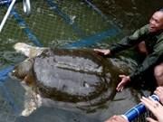 Nuevo estanque para tortuga sagrada