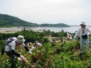 Colaboran Viet Nam y Japón en reforestación