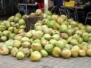 Aumenta exportación vietnamita de coco