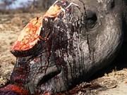 Extinguido rinoceronte de Java en Viet Nam
