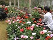 Asistencia de FAO al cultivo de flor en Vietnam