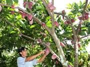 Vietnam planea desarrollar industria de cacao