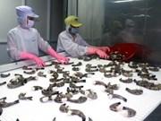 Camaroneros vietnamitas orientan exportaciones a Asia