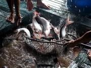 Vietnam aumenta exportación de pescado Tra a América