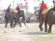 Elefantes de Dak Lak compiten en carrera