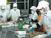 Crecen exportaciones de productos pesqueros vietnamitas