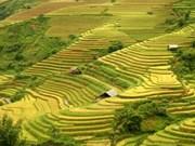 Las magníficas terrazas de arroz de Mu Cang Chai