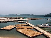 Quang Ninh abrirá rutas turísticas en bahía Bai Tu Long