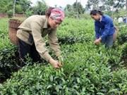 Vietnam logra éxito en lucha contra pobreza