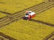 Vietnam se centra en desarrollo agrícola a gran escala en Delta de Mekong