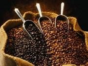 Dak Lak sustituye siembra de café