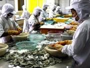 Lealtad comercial del camarón vietnamita