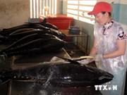 Aplicación de tecnología avanzada, salvavidas para agricultura vietnamita