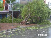 Tifón Rammasun provoca severas pérdidas en Vietnam