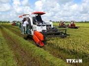 Arroz: rubro estratégico para cultivo de Vietnam
