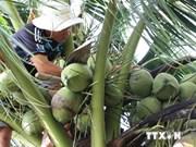 Provincia vietnamita incrementa exportación de coco