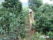 Vietnam por cumplir Objetivos de Milenio en zonas de minorías