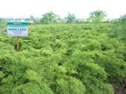 Bac Giang empeñada en renovar la agricultura
