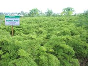 Bac Giang obtiene éxitos en protección forestal