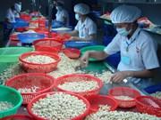 Exportaciones vietnamitas de anacardo ganan récord