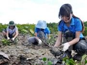 Jóvenes vietnamitas asisten a festival de plantación de árboles