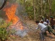 Catorce provincias vietnamitas amenazadas por incendios forestales
