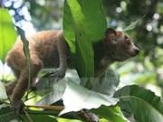 Vietnam se esfuerza por eliminar comercio ilegal de animales salvajes